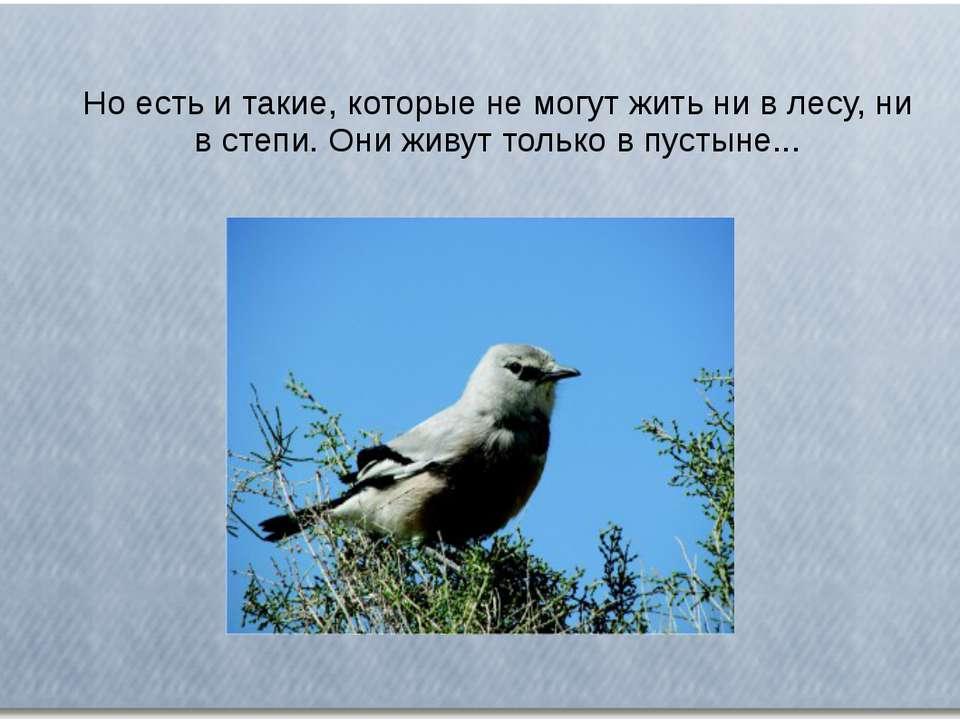 Но есть и такие, которые не могут жить ни в лесу, ни в степи. Они живут тольк...