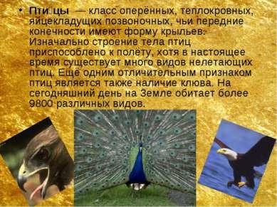 Пти цы — класс оперённых, теплокровных, яйцекладущих позвоночных, чьи передн...