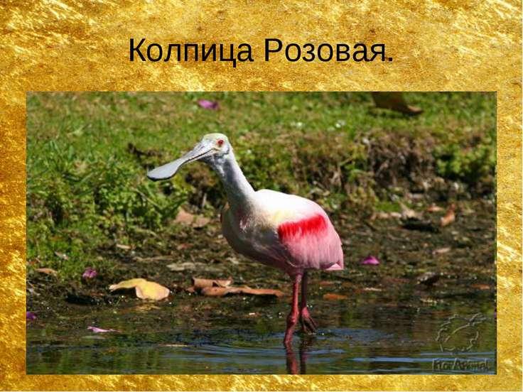 Колпица Розовая.