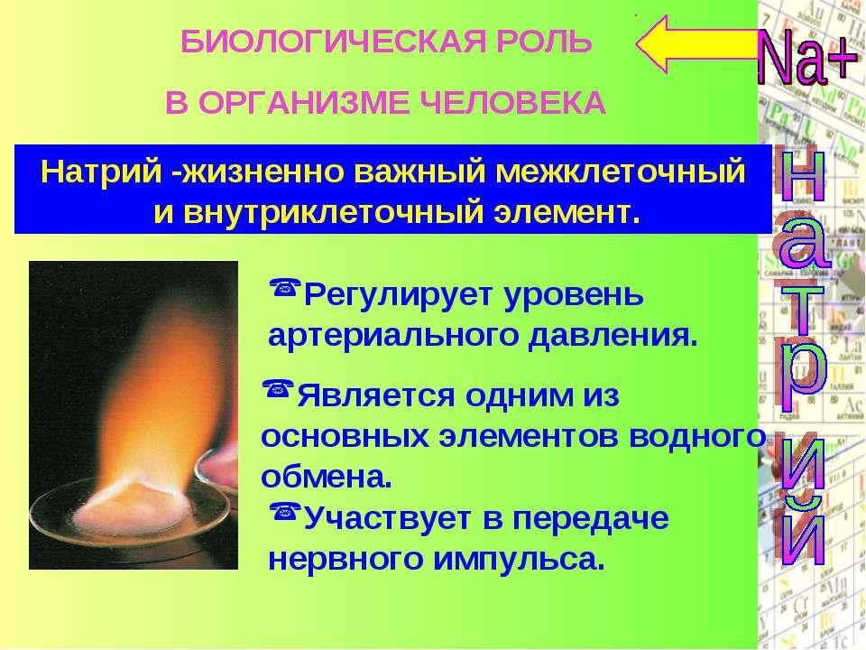 Натрий -жизненно важный межклеточный и внутриклеточный элемент. Регулирует ур...