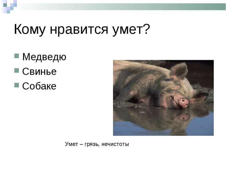 Кому нравится умет? Медведю Свинье Собаке Умет – грязь, нечистоты