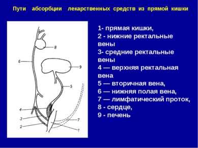 1- прямая кишки, 2 - нижние ректальные вены 3- средние ректальные вены 4 — ве...