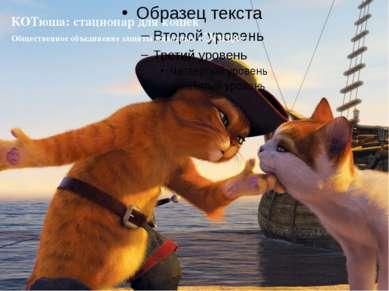 КОТюша: стационар для кошек Общественное объединение защиты животных «Эгида»