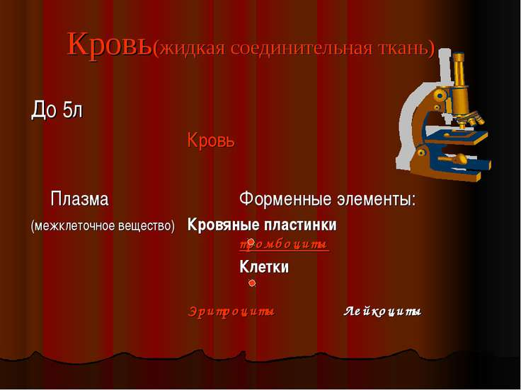 Кровь(жидкая соединительная ткань) До 5л Кровь Плазма Форменные элементы: (ме...