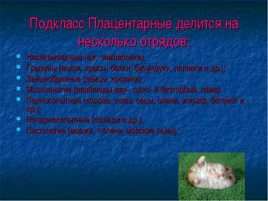 Подкласс Плацентарные делится на несколько отрядов: Насекомоядные (еж, землер...