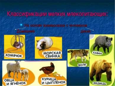 Классификации мелких млекопитающих: На основе взаимосвязи с человеком Домашни...