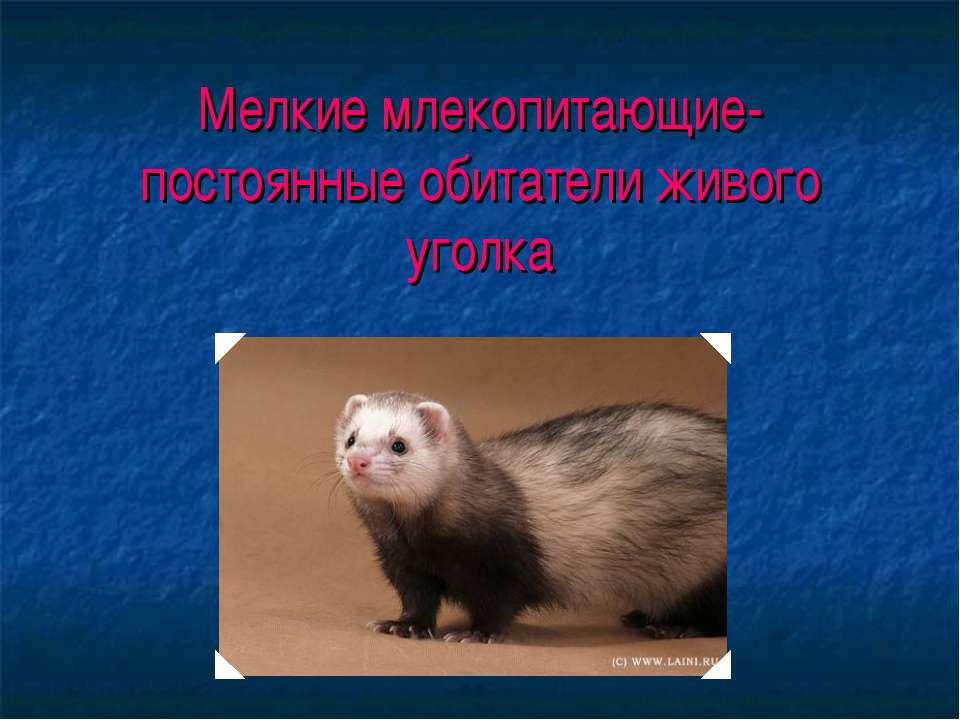 Мелкие млекопитающие- постоянные обитатели живого уголка