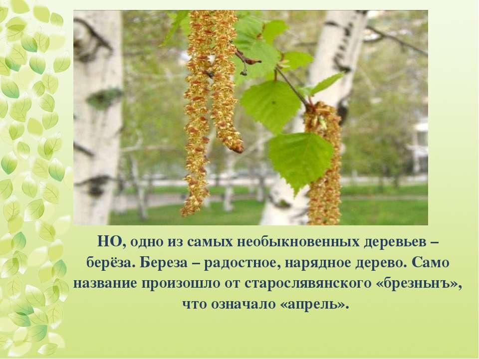 НО, одно из самых необыкновенных деревьев – берёза. Береза – радостное, наряд...