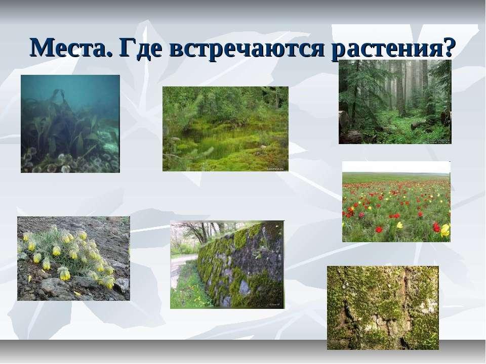 Места. Где встречаются растения?