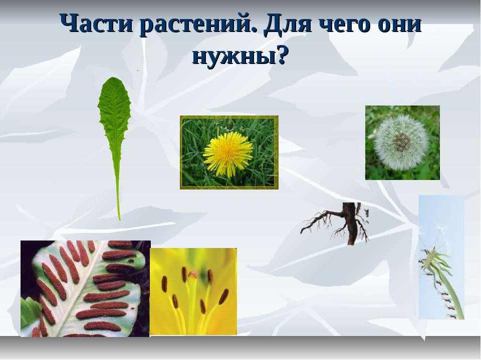 Части растений. Для чего они нужны?