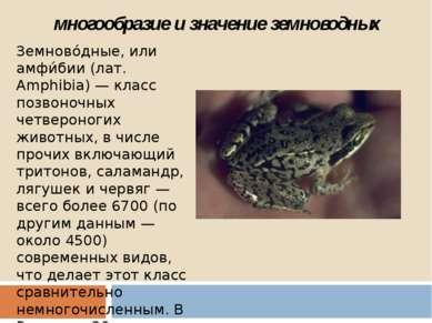 многообразие и значение земноводных Земново дные, или амфи бии (лат. Amphibia...