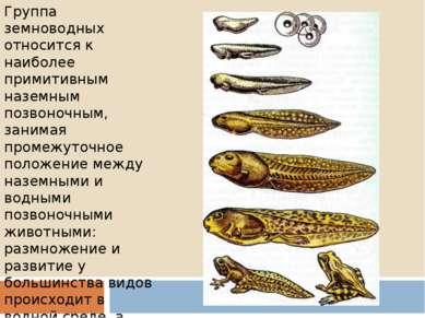 Группа земноводных относится к наиболее примитивным наземным позвоночным, зан...