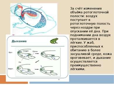 За счёт изменения объёма ротоглоточной полости: воздух поступает в ротоглоточ...
