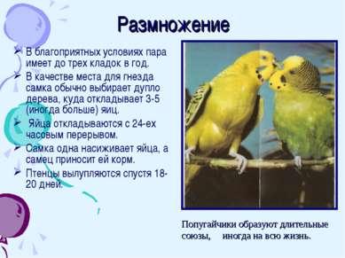 Размножение В благоприятных условиях пара имеет до трех кладок в год. В качес...