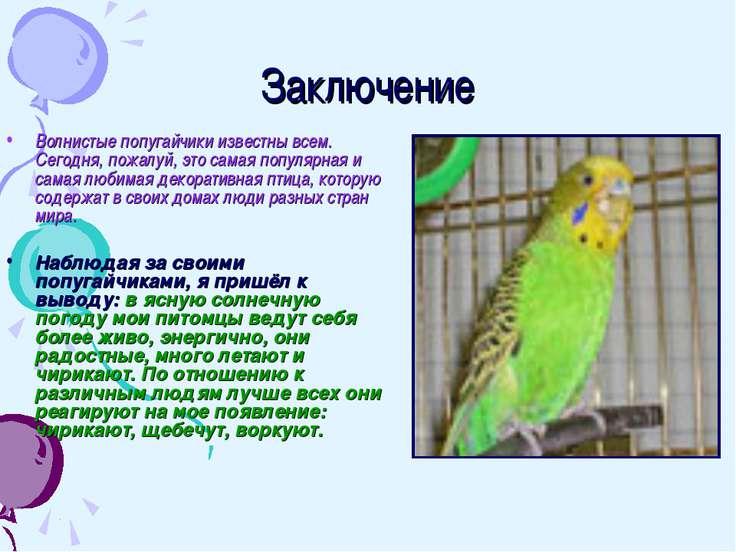 Заключение Волнистые попугайчики известны всем. Сегодня, пожалуй, это самая п...