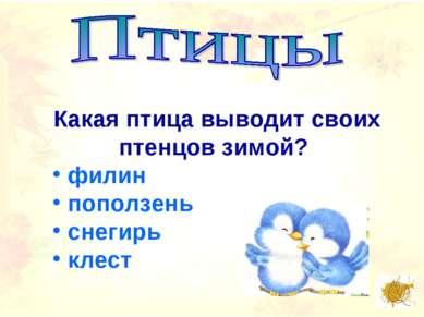 Какая птица выводит своих птенцов зимой? филин поползень снегирь клест