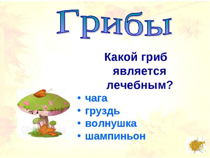 Какой гриб является лечебным? чага груздь волнушка шампиньон