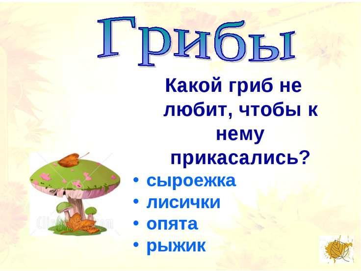 Какой гриб не любит, чтобы к нему прикасались? сыроежка лисички опята рыжик
