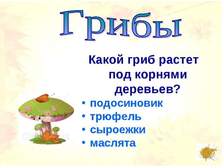 Какой гриб растет под корнями деревьев? подосиновик трюфель сыроежки маслята