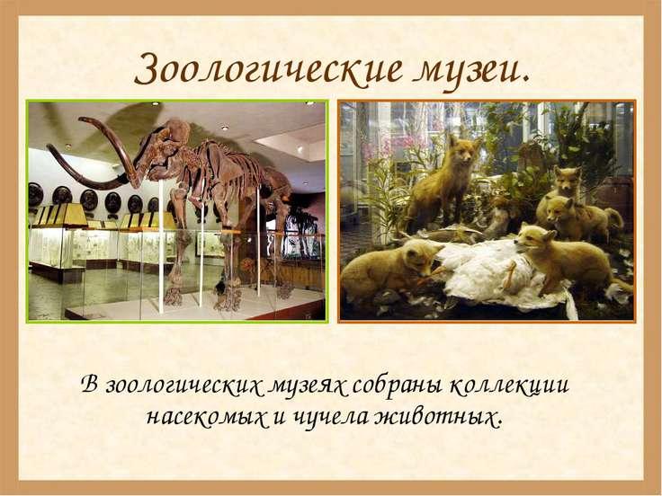 Зоологические музеи. В зоологических музеях собраны коллекции насекомых и чуч...