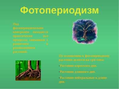 Фотопериодизм Под фотопериодическим контролем находятся практически все проце...