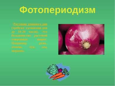 Фотопериодизм - Растения длинного дня (требуют удлинения дня до 16-20 часов)....