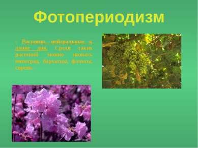 Фотопериодизм - Растения, нейтральные к длине дня. Среди таких растений можно...