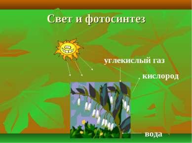 Свет и фотосинтез углекислый газ кислород вода