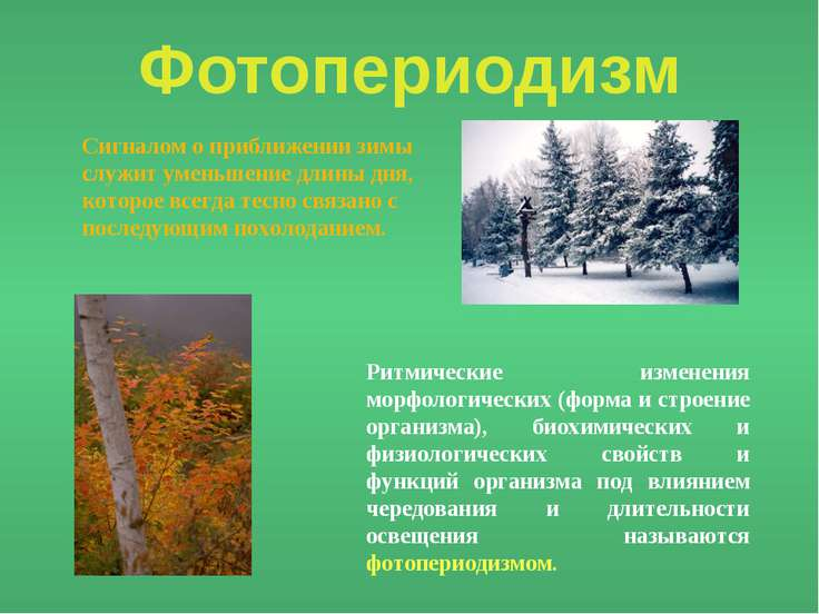 Фотопериодизм Сигналом о приближении зимы служит уменьшение длины дня, которо...