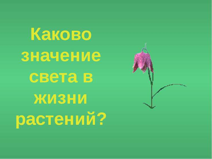 Каково значение света в жизни растений?
