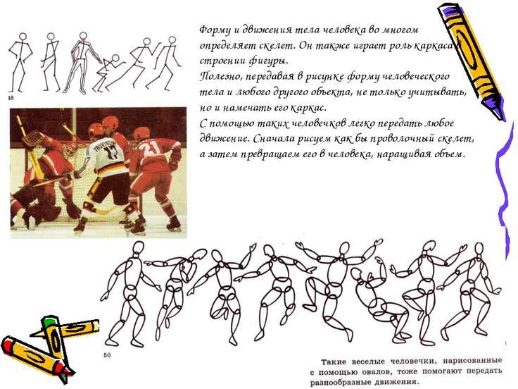 Форму и движения тела человека во многом определяет скелет. Он также играет р...