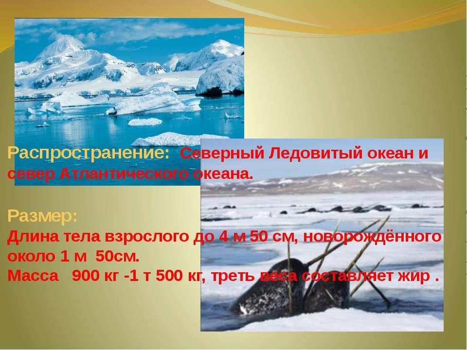 Распространение: Северный Ледовитый океан и север Атлантического океана. Разм...