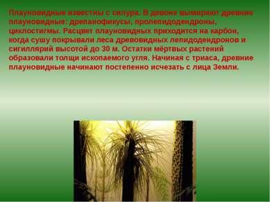 Плауновидные известны с силура. В девоне вымирают древние плауновидные: дрепа...