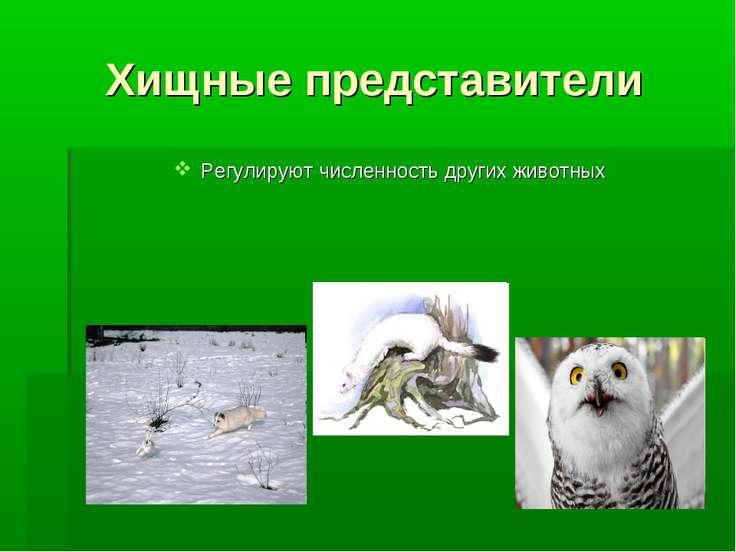 Хищные представители Регулируют численность других животных