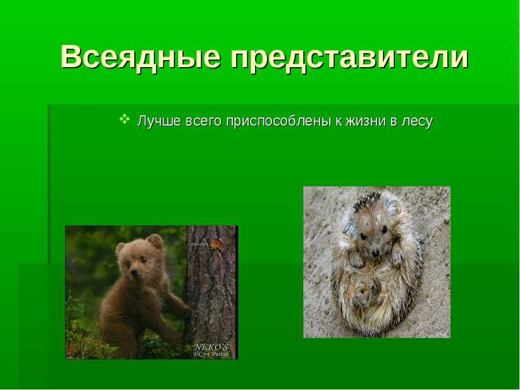 Всеядные представители Лучше всего приспособлены к жизни в лесу