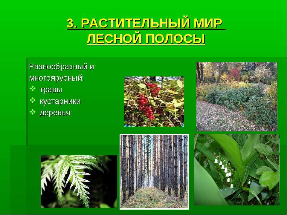 3. РАСТИТЕЛЬНЫЙ МИР ЛЕСНОЙ ПОЛОСЫ Разнообразный и многоярусный: травы кустарн...