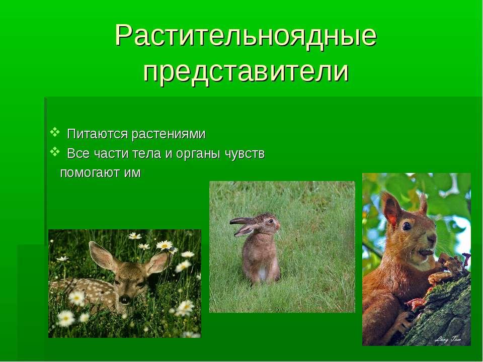 Растительноядные представители Питаются растениями Все части тела и органы чу...