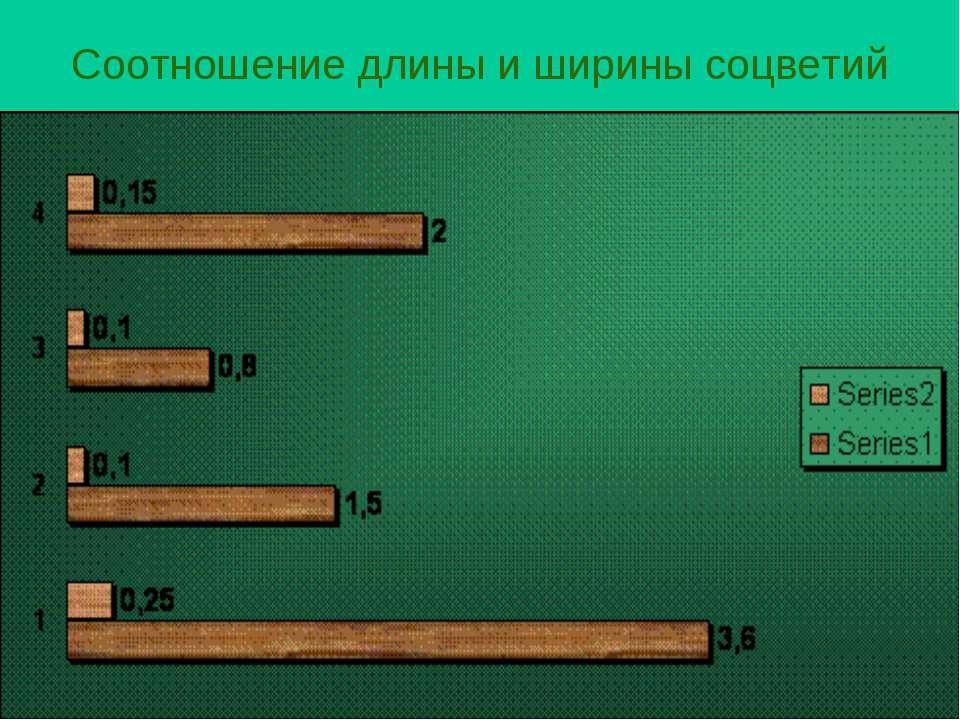 Соотношение длины и ширины соцветий
