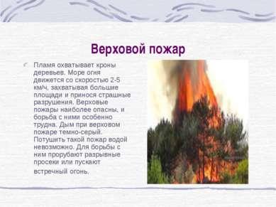 Верховой пожар Пламя охватывает кроны деревьев. Море огня движется со скорост...