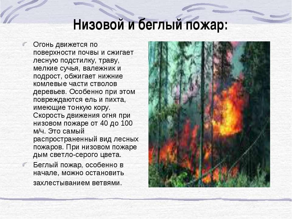 Низовой и беглый пожар: Огонь движется по поверхности почвы и сжигает лесную ...