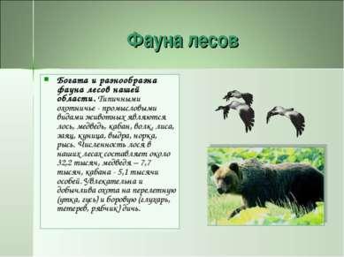 Фауна лесов Богата и разнообразна фауна лесов нашей области. Типичными охотни...