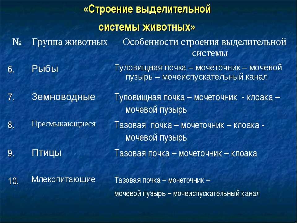 «Строение выделительной системы животных» № Группа животных Особенности строе...