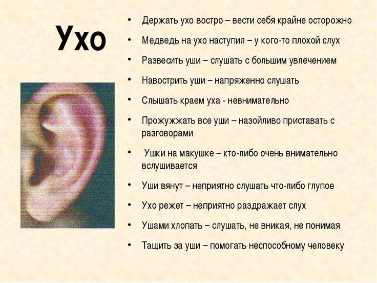 Ухо Держать ухо востро – вести себя крайне осторожно Медведь на ухо наступил ...