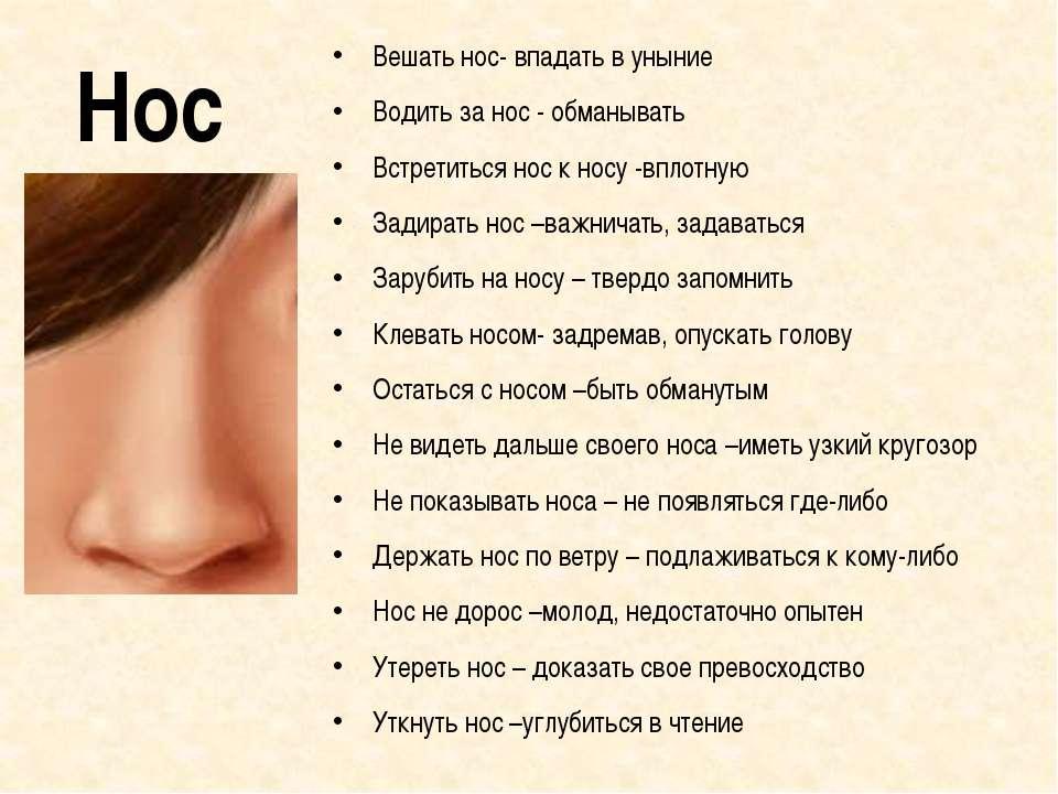 Нос Вешать нос- впадать в уныние Водить за нос - обманывать Встретиться нос к...