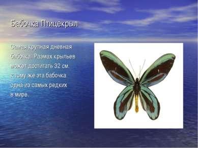 Бабочка Птицекрыл Самая крупная дневная бабочка. Размах крыльев может достига...