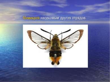 Мимикрия насекомым других отрядов.