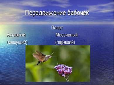 Передвижение бабочек Полет Активный Массивный (машущий) (парящий)