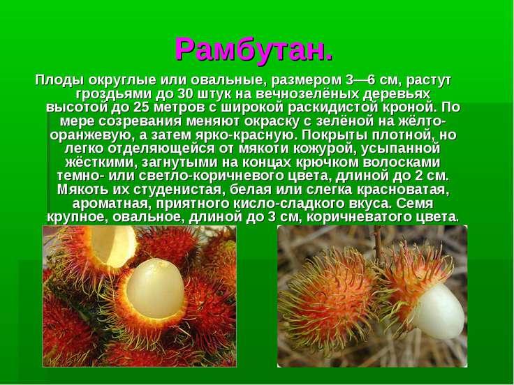 Рамбутан. Плодыокруглые или овальные, размером 3—6см, растут гроздьями до 3...