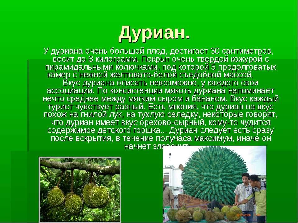 Дуриан. У дуриана очень большой плод, достигает 30 сантиметров, весит до 8 ки...