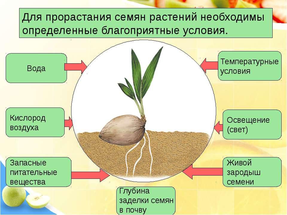 Для прорастания семян растений необходимы определенные благоприятные условия....